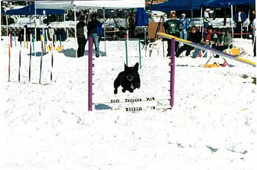 Babar ran agility in the snow