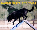 Agility Success Dog Art