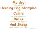 Herding Champion shirts and mugs